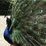 مجموعه اقامتی پذیرایی باغ پرندگان ماسال