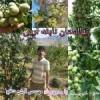 نهالستان نابغه آرش