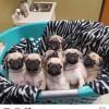 خرید و فروش حیوانات خانگی دلتاپت