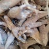 تولید عرقیجات خانگی و سنتی در گوکان