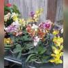 فروشگاه گل رز طلایی در مشهد