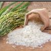 خرید و فروش برنج و جو کارخانه برنجکوبی گیلان مدرن