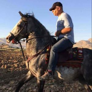 مزرعه پرورش اسب اصیل کرد سیجانی