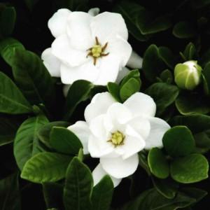 مجتمع تولیدی گل و گیاه تاج محل