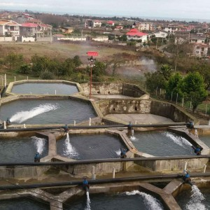 پرورش ماهی قزل آلا سرچشمه شیخ زاهد