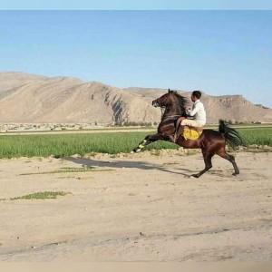 مزرعه پروش اسب و باشگاه سوارکاری یاشار