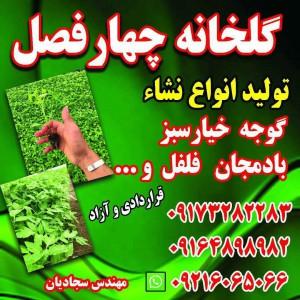 گلخانه چهار فصل در فارس