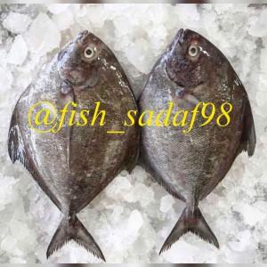 فروشگاه ماهی و میگو احمدی