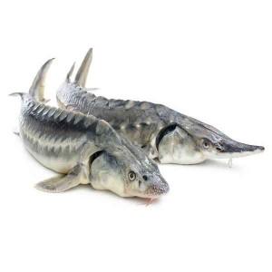 مرکز پرورش ماهیان خاویاری و تفرجگاه قره سو