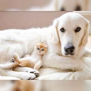 غذای حیوانات خانگی دکتر پت