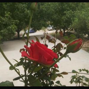 مجتمع گردشی و تفریحی رود شیر زارع سپیدان