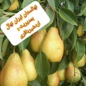 نهالستان ایران نهال