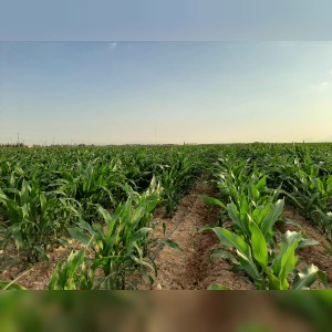 مرکز خدمات فنی مهندسی کشاورزی نایریکا