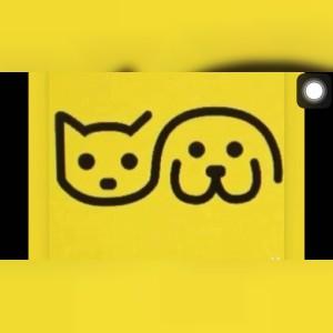 غذای خانگی سگ و گربه پاپی